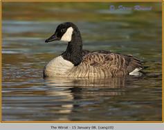 canada-goose-10.jpg