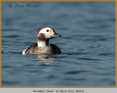 long-tailed-duck-24.jpg