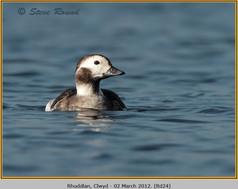 long-tailed-duck-24.jpg