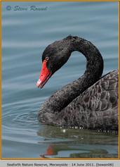 black-swan-08.jpg