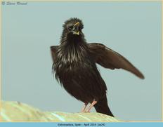 spotless-starling-24.jpg