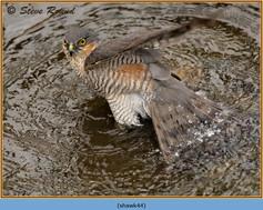 sparrowhawk-44.jpg