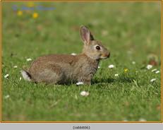 rabbit-06.jpg