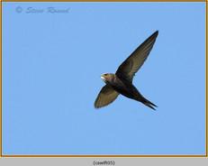 swift-05.jpg