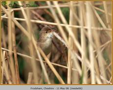 reed-warbler-06.jpg