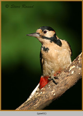 gt-s-woodpecker-01.jpg