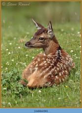 red-deer-66.jpg