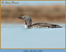 red-throated-diver- 87.jpg