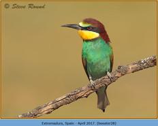bee-eater-28.jpg
