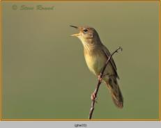 grasshopper-warbler-33.jpg