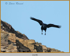raven-38.jpg