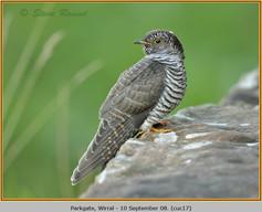 cuckoo-17.jpg