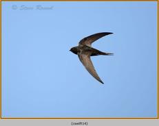 swift-14.jpg