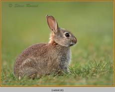 rabbit-18.jpg