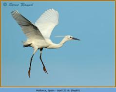 little-egret-80.jpg