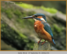 kingfisher-19.jpg