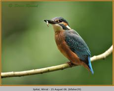 kingfisher-29.jpg