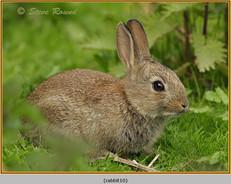 rabbit-10.jpg