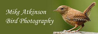 Logo - MikeAtkinson.jpg