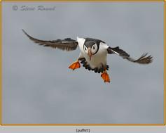 puffin- 65.jpg