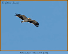 booted-eagle-05.jpg