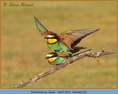 bee-eater-25.jpg