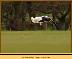 white-stork-12.jpg