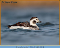 long-tailed-duck-27.jpg
