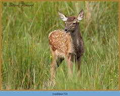 red-deer-73.jpg