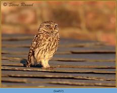 little-owl-57.jpg