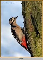 gt-s-woodpecker-46.jpg