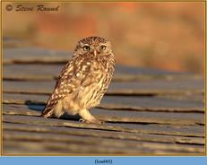 little-owl-49.jpg