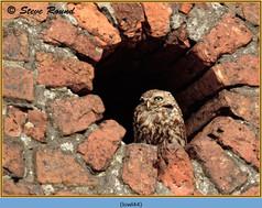 little-owl-44.jpg