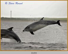 bottlenose-dolphin-04.jpg