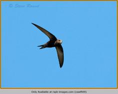 swift-09.jpg