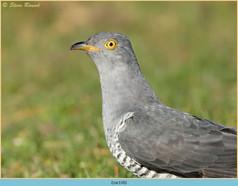 cuckoo-116.jpg