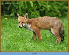 fox-76.jpg