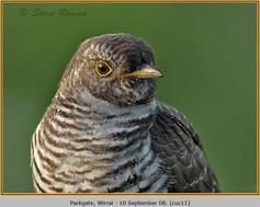 cuckoo-11.jpg