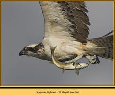 osprey-16.jpg