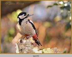 gt-s-woodpecker-49.jpg