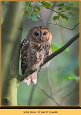 tawny-owl-08.jpg