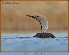 red-throated-diver-114.jpg