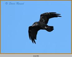 raven-18.jpg