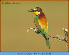 bee-eater-19.jpg