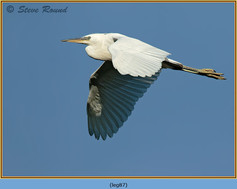 little-egret-87.jpg