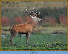 red-deer-58.jpg