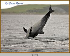 bottlenose-dolphin-10.jpg
