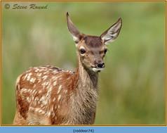 red-deer-74.jpg