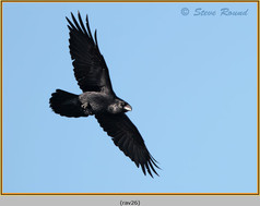 raven-26.jpg