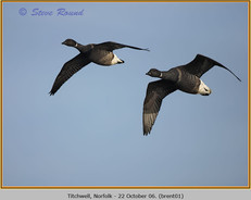 brent-goose-01.jpg